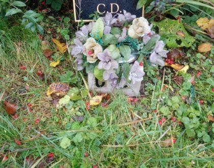 C D: a Scandalous Burial?
